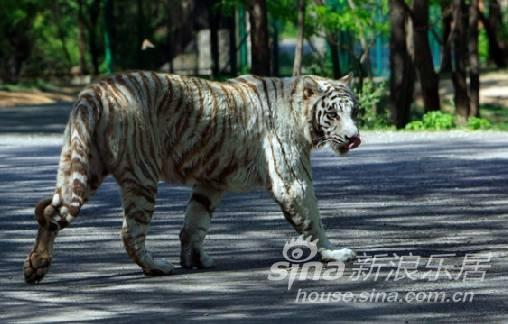 珠海人游北京,看老虎,看大象 看悲催的平安电话车险