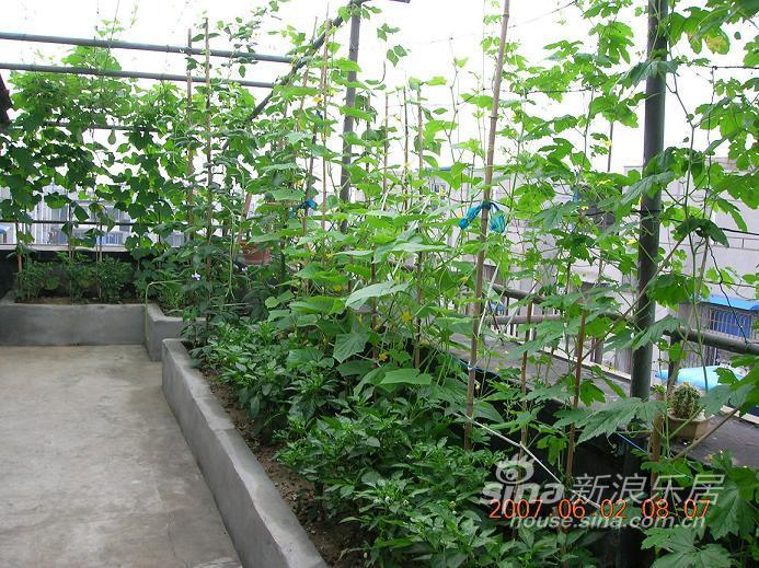 家庭屋顶菜园效果图_