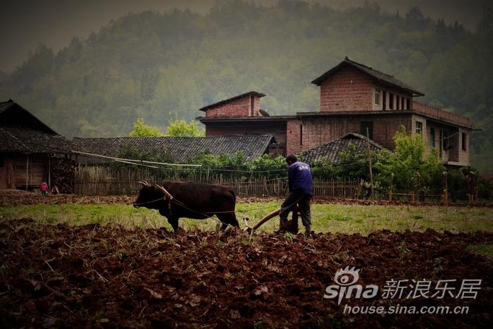 老区的农民伯伯在春耕图片