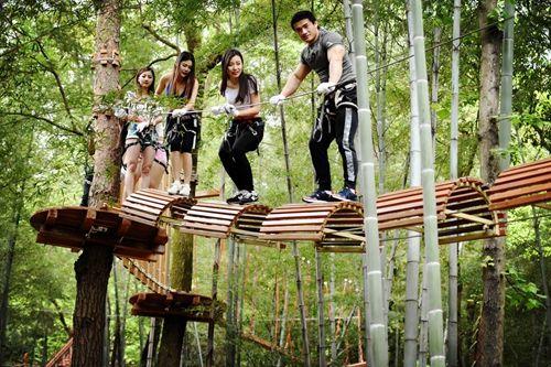 带你领略惊险刺激的丛林穿越