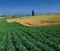 新一轮土地制度改革开启 创新与风险管控并重